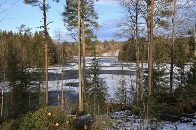 6 februari 2020 - Skogen på Kallnäset avverkades, ända fram till norra stranden.