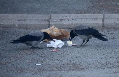 14 mars 2020 - Städpatrullen tog hand om matrester som slarviga människor slängt på torget.