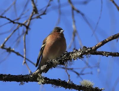 10 april 2020 - Fåglarna kände att våren var på gång.