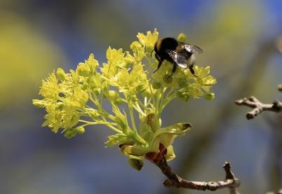 26 april 2020 - Våren stod i blom.