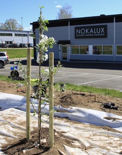 5 maj 2020 - Nokalux planterade blommande träd vid E18.