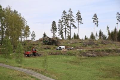 26 maj 2020 - På Kallnäset tog man bort riset efter skogsavverkningen.