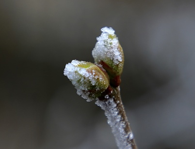 6 mars 2020 - Det var en kamp mellan vinter och vår.