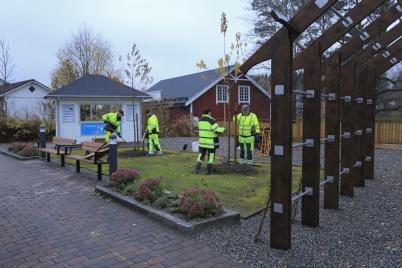 26 oktober 2020 - Och i Kioskparken planterade kommunen träd.