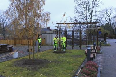 26 oktober 2020 - Kommunen planterade två träd (Ginnalalönn) i Kioskparken.