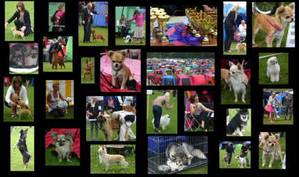 Hundutställning Borås 2011