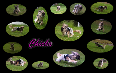 Chicko in Action !