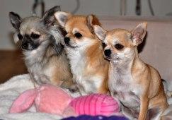 Fanny, Saga och Samantha ... Fotograf: Jeanette Mattsson
