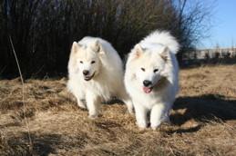 G'zon & Myra - 2010