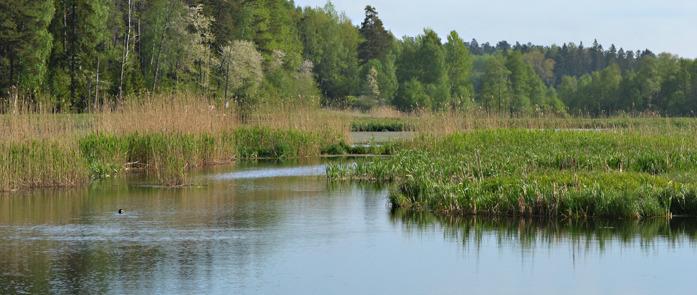 Alhagens våtmark  Foto Eivor Bernas