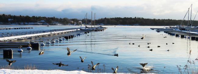 Småbåtshamnen Foto Eivor Bernas
