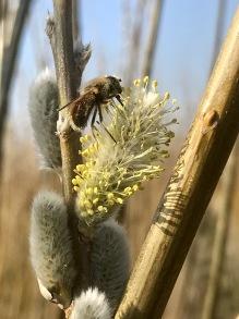 Bikupa Lovisa - Bikupa Lovisa är placerad på Lönnhults marker i På kullahalvön. Lönnhullt är en av de större gårdarna på kullahalvön odlar både raps ,åkerbönor , vitklöver mm. Ägarna månar mycket om den biologiska mångfalden och sår även in blommande kantzoner till glädj