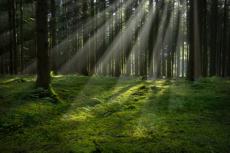 Magisk skog med ljusstrålar