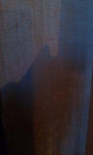 Katt bakom gardin