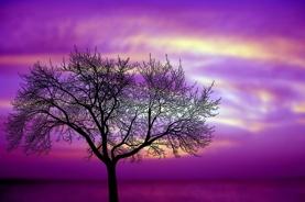 Träd mot lila himmel