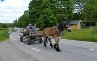 Hästen Kotten ville också vara med.