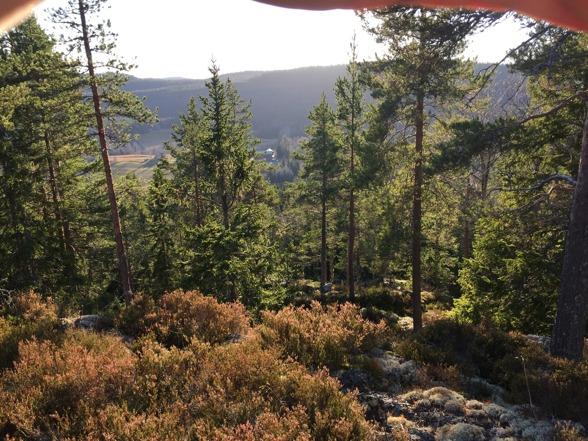"""Utsikt från Tiaberget och """"vår"""" skog"""