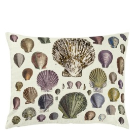 John Derian Kudde Captain Thomas Brown's Shells Oyster CCJD5015 (2-PACK)