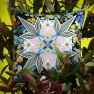 Christian Lacroix Kudde FLOWERS GALAXY MULTICOLORECCCL0593X (2-PACK ) Kampanj 25% rabatt på hela köpet över 5000 kr (gäller ej rea och tyger) KOD. GTGYTKXL