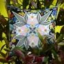 Christian Lacroix Kudde FLOWERS GALAXY MULTICOLORECCCL0593 (2-PACK ) Kampanj 25% rabatt på hela köpet över 5000 kr (gäller ej rea och tyger) KOD. GTGYTKXL