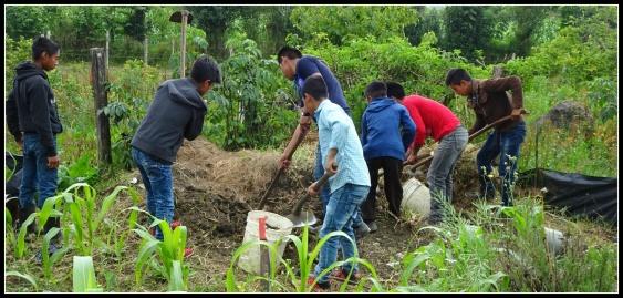 Högstadielever som arbetar med sin trädgårdsodling.