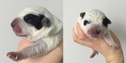 Hane 1 nyfödd