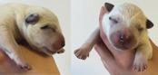 Hane 3 nyfödd