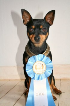 Rocky 2:nd place out of 58 dogs in Agility class 1