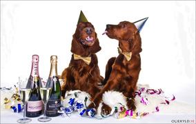 Hundvänligt NYÅR 31/12-19! - Nyår: En deltagande hund