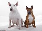 2-hundslydnad