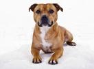 Föredrag: Otäcka mördarhundar eller söta bullar?