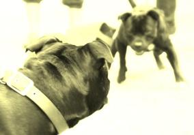 Föredrag: Hjälp! Hundslagsmål!