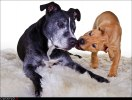Hundläroverket2011-22b