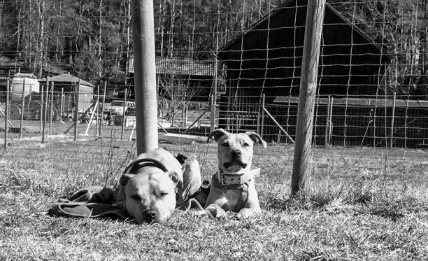 hundcenter