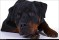 Hundläroverket2011-18b
