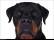 Hundläroverket2011-16b