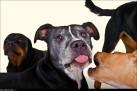 Hundmöteskurs, BAT-inspirerad