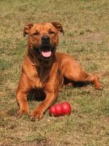 belöningsvaserad hundträning