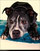 kamphund