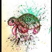 sköldpadda- såld
