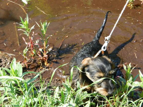 Saga badar i bäcken