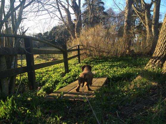 Saga på promenad i trädgården. Här fick hon syn på grannens lamm på andra sidan staketet.