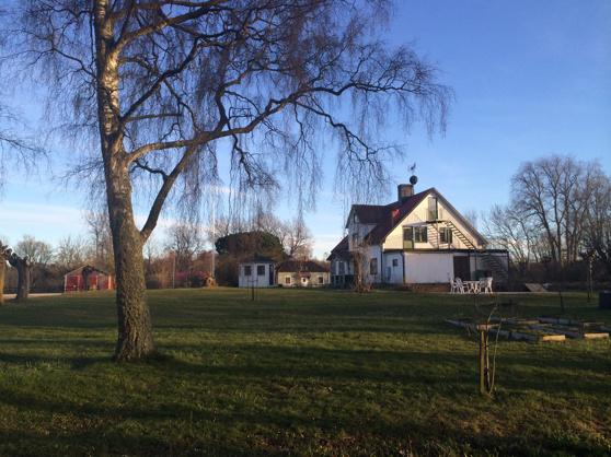 Sedan vi lät såga ned några stora träd är det riktigt luftigt på gården!