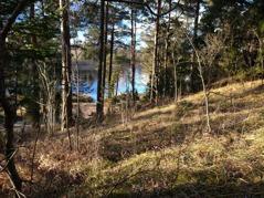 Så här vackert är det vid joggingspåret vid Sigvalde Träsk