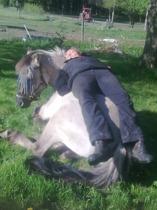 Hästens säng?