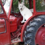 bigge i traktorn