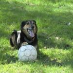 lusse spelar boll