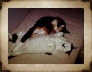 Musse & Missi