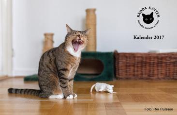 Rädda Kattens Kalender 2017