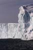 isberg m fågel högkant WEBB-2306